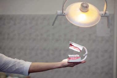 a reception in the office of the dentist, the doctor shows the training jaw