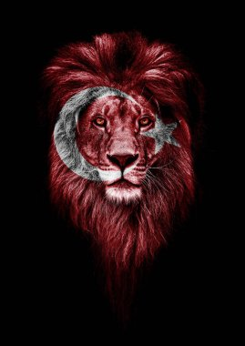 Portrait of a Beautiful lion, faceart and patriotism concept. Portrait of a leader. king. Portrait of a lion with a projection of the flag of the Turkey. Patriot of his country