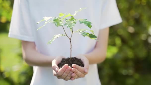 close up hands holding sapling of young oak tree. Female palms embrace the soil stem a small tree. blurred green background, white shirt. concept nature conservation, Earth protection, reforestation