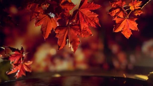 Vörös arany levelek hullanak a víz fölé..