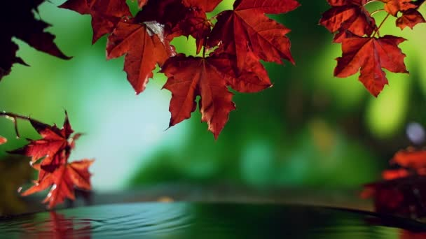 close up of red autumn maple leaves over water on green background.