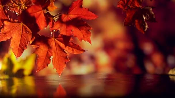 zblízka padají na vodu červené listí. kapky deště padající do vody
