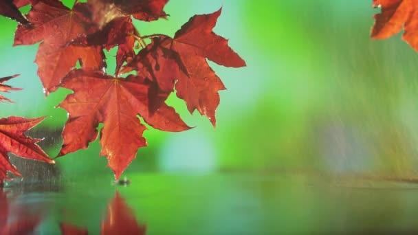 zblízka červené podzimní javorové listy nad vodou na zeleném pozadí.