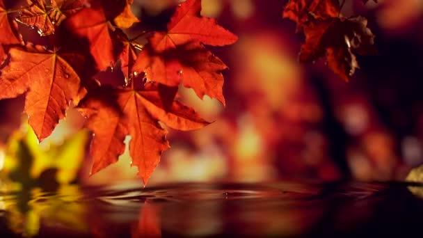 Zblízka červené zlaté listy padající na vodu.
