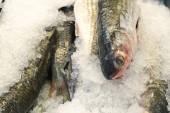 Fagyasztott halat és tenger gyümölcseit, a jég a piacon.