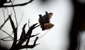 két madár ül a faágon