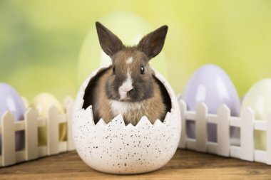 Easter rabbit in a shell of eggs. Pastel eggs.