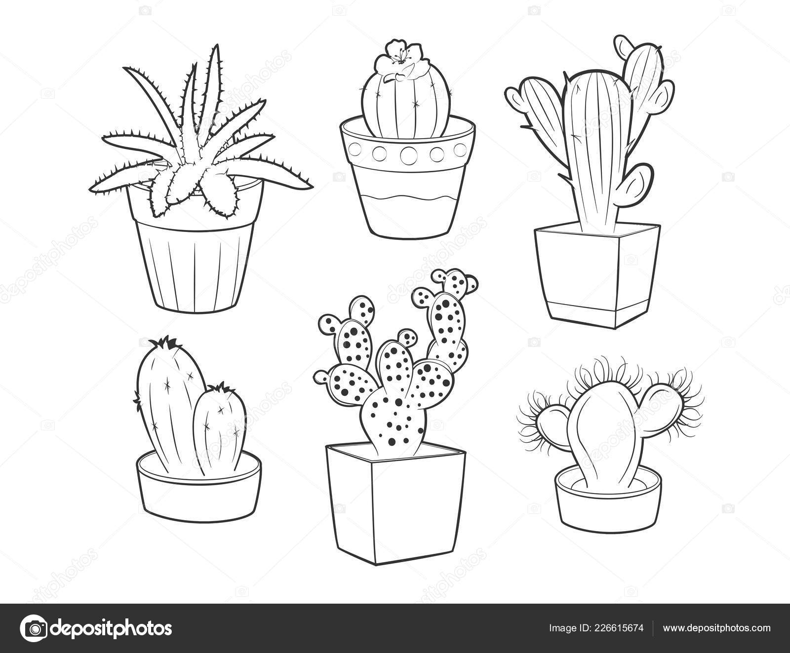 Illustration Vectorielle Différents Cactus Plantes Grasses