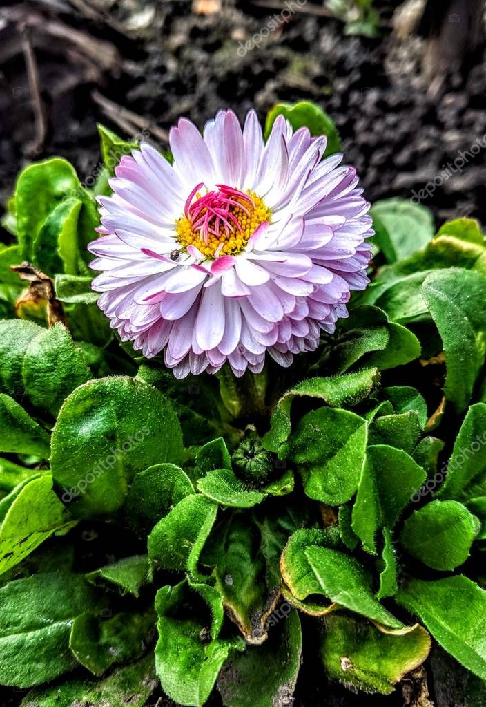 Spring flowers.Beautiful flower