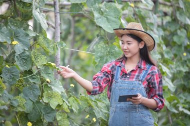 Asian women Agronomist and farmer Using Technology for inspectin