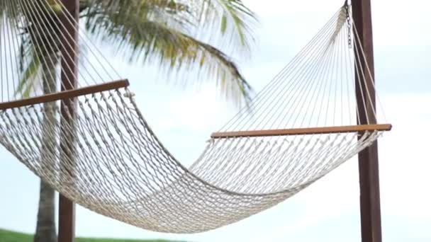 A beautiful picture. The hammock is suspended between palms.