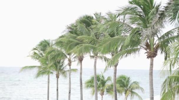 Hodně na palmy a moře
