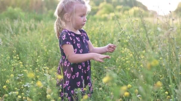 Krásná holčička shromažďuje kytici divokých květin na poli