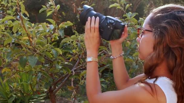 der Fotograf im Nature Stock Video ist ein wunderschöner Videoclip, der einen attraktiven Schmetterling beim Fotografieren im Garten zeigt.