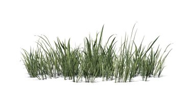 Thick Grass cluster with shadow on the floor - isolated on white background