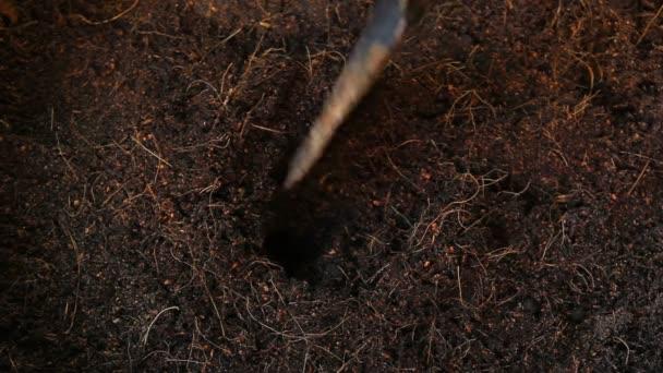 Výsadba stromu, setí rostlin