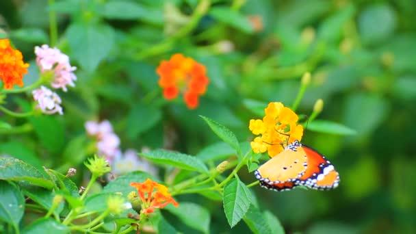Butterfly on flower field