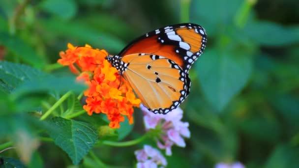 Schmetterling auf einzelne Blume