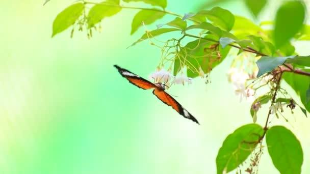 Motýl létající na květ
