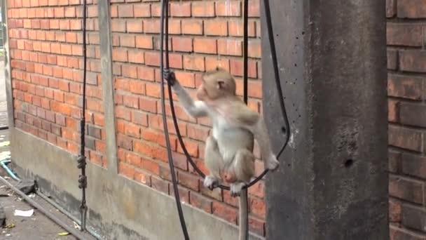 Na černém drátu proti cihlové stěně sedí trochu divoký makak. Thajsko