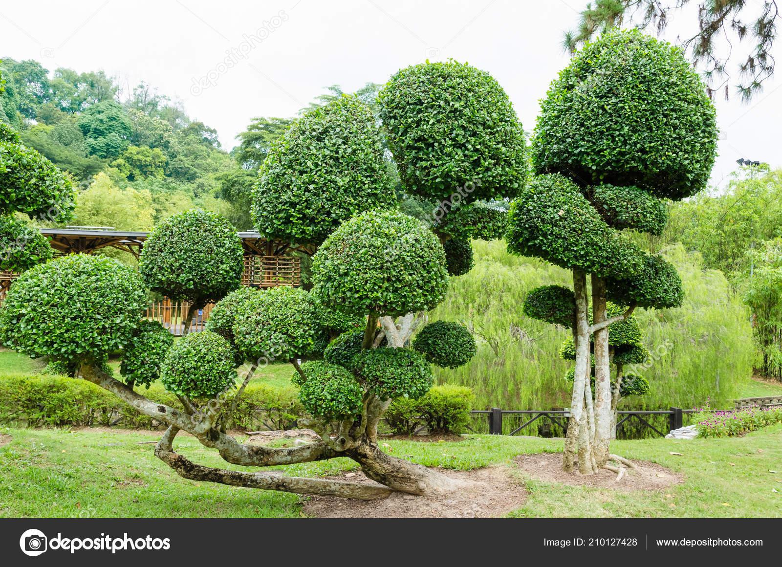 Bomen In Tuin : Streblus asper bomen tuin u2014 stockfoto © gracethang #210127428