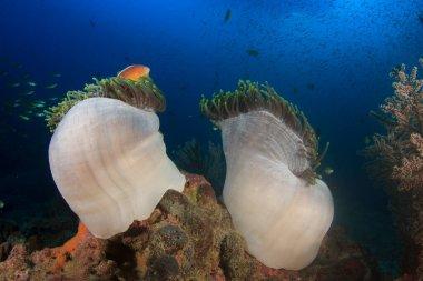 """Картина, постер, плакат, фотообои """"чистая голубая подводная жизнь со многими красочными рыбами постеры животные"""", артикул 381007762"""