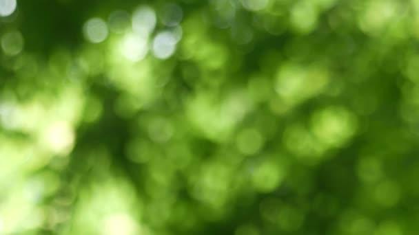 zelené bokeh abstraktní pozadí