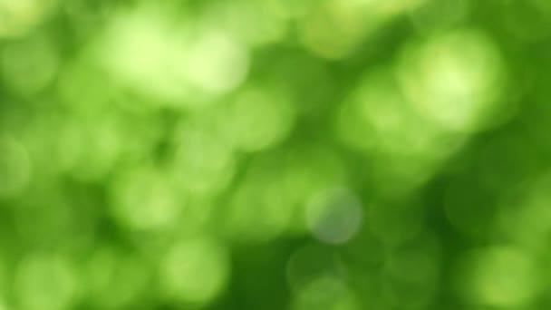 Zöld Bokeh Absztrakt háttér