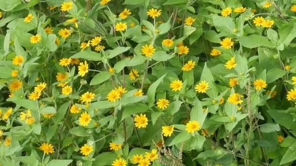 žlutý květ v zemi zpět příroda zahrada rozostření, květy s pupeny levandule kymácí ve větru