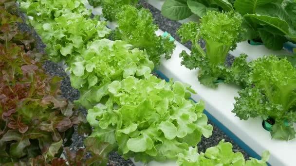 Organic Vegetable Growing.diet food  styles.