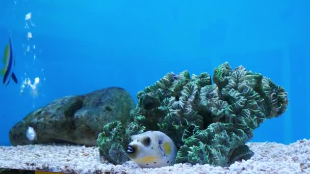 Beautiful Fish Aquarium Decoration Aquatic Plants Background Colorful Fish Fish Stock Video C Ducksmall 211854216