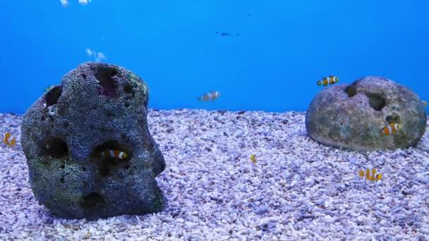 Krásné ryby v akváriu na zdobení vodních rostlin pozadí. Barevné ryby v akváriu.