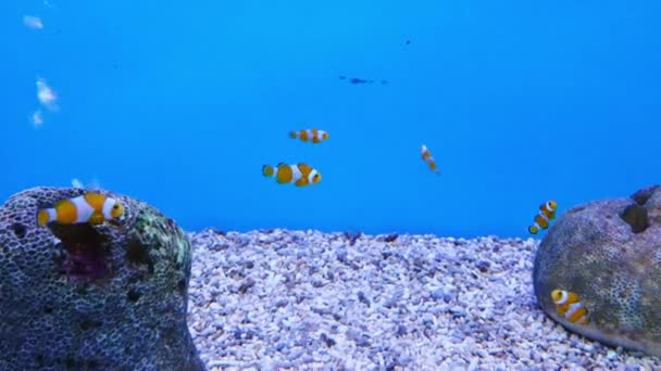 Beautiful fish in the aquarium on decoration  of aquatic plants background. A colorful  fish in fish tank.