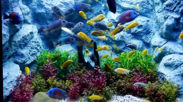 Hermosos Peces Acuario Con Decoración Acuático Plantas Fondo