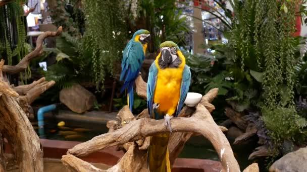 Krásný macore papoušek pták stojící na dřevěné