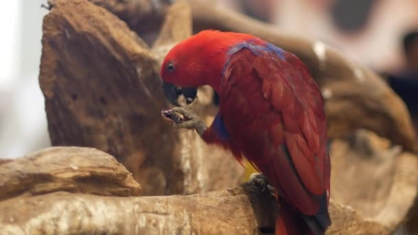 Beautiful macore parrot bird standing on a wooden