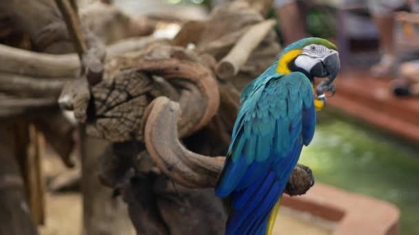 Macore pták drží na větev stromu. Krásný macore papoušek pták stojící na dřevěné.