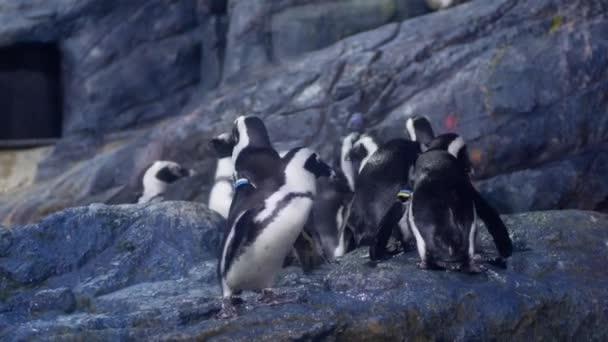 Pingvin úszott az állatkert a víztartály.