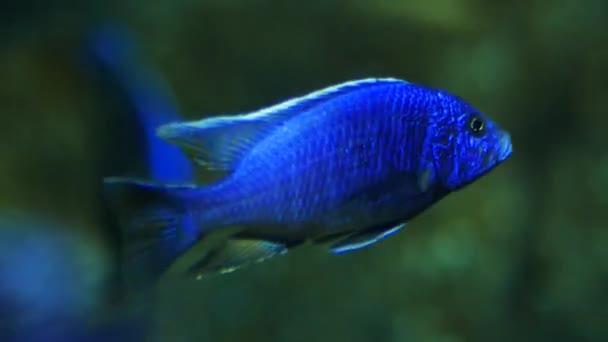 Beautiful Fish Aquarium Decoration Aquatic Plants Background Colorful Fish Fish Stock Video C Ducksmall 233560672