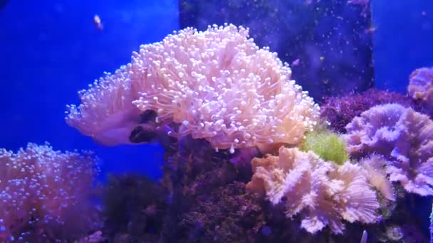 Beautiful sea flower in underwater world with corals.