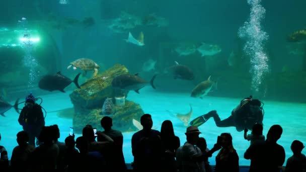 Chon Buri, Thailand - January,1 2019 : Aquanaut man and beautiful fish in the aquarium on decoration  of aquatic plants background at The Institute of Marine Science of Burapha University, Thailand.