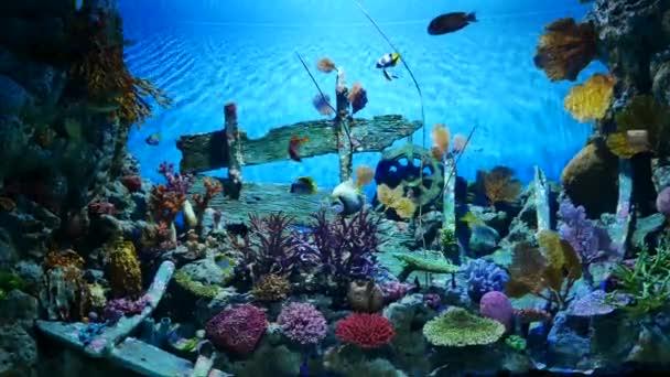 Krásná ryba v akváriu. Ryby v akváriu.