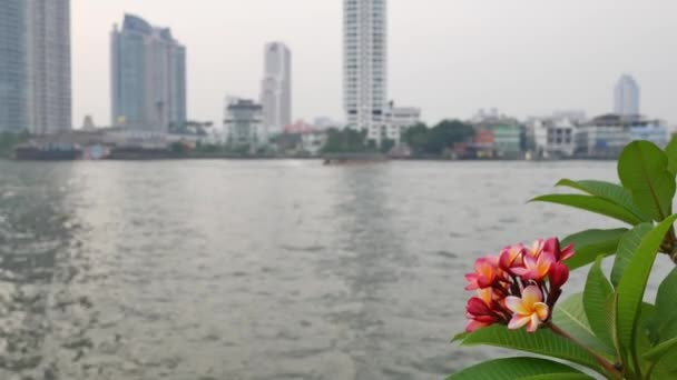 Pink flowers near the river and city background.