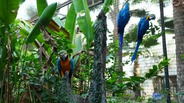 Krásný papoušek papoušek pták stojící.