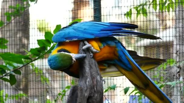 In piedi bello macaw pappagallo uccello.
