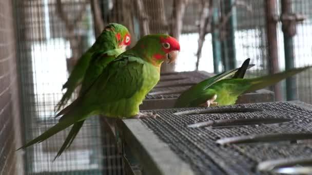 schöner Ara Papageienvogel stehend.