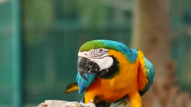 Gyönyörű macore papagáj madár állt egy fa