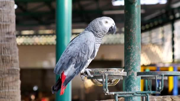 Gyönyörű Ara papagáj madarak állandó.