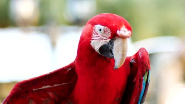 Bello macaw pappagallo uccello in piedi su un legno