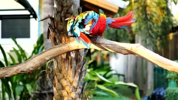 Gyönyörű Ara papagáj madár állt egy fa